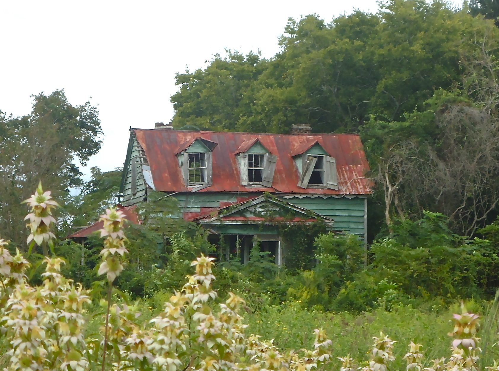 edisto island men Explore an array of edisto island, sc vacation rentals, including houses, villas & more bookable online choose from more than 1,500 properties, ideal house rentals for families, groups and couples.