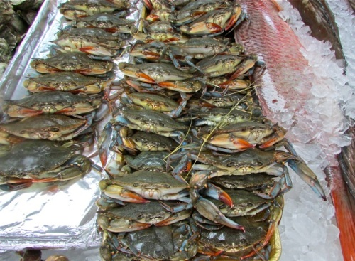 Fresh, live and local! Softshell crabs at my favorite local seafood market, the Sea Eagle.