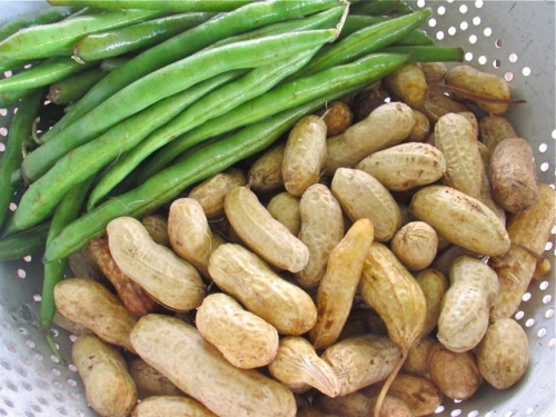 Fresh green beans and raw 'green' peanuts - pretty!